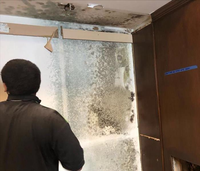 SERVPRO worker comes across mold